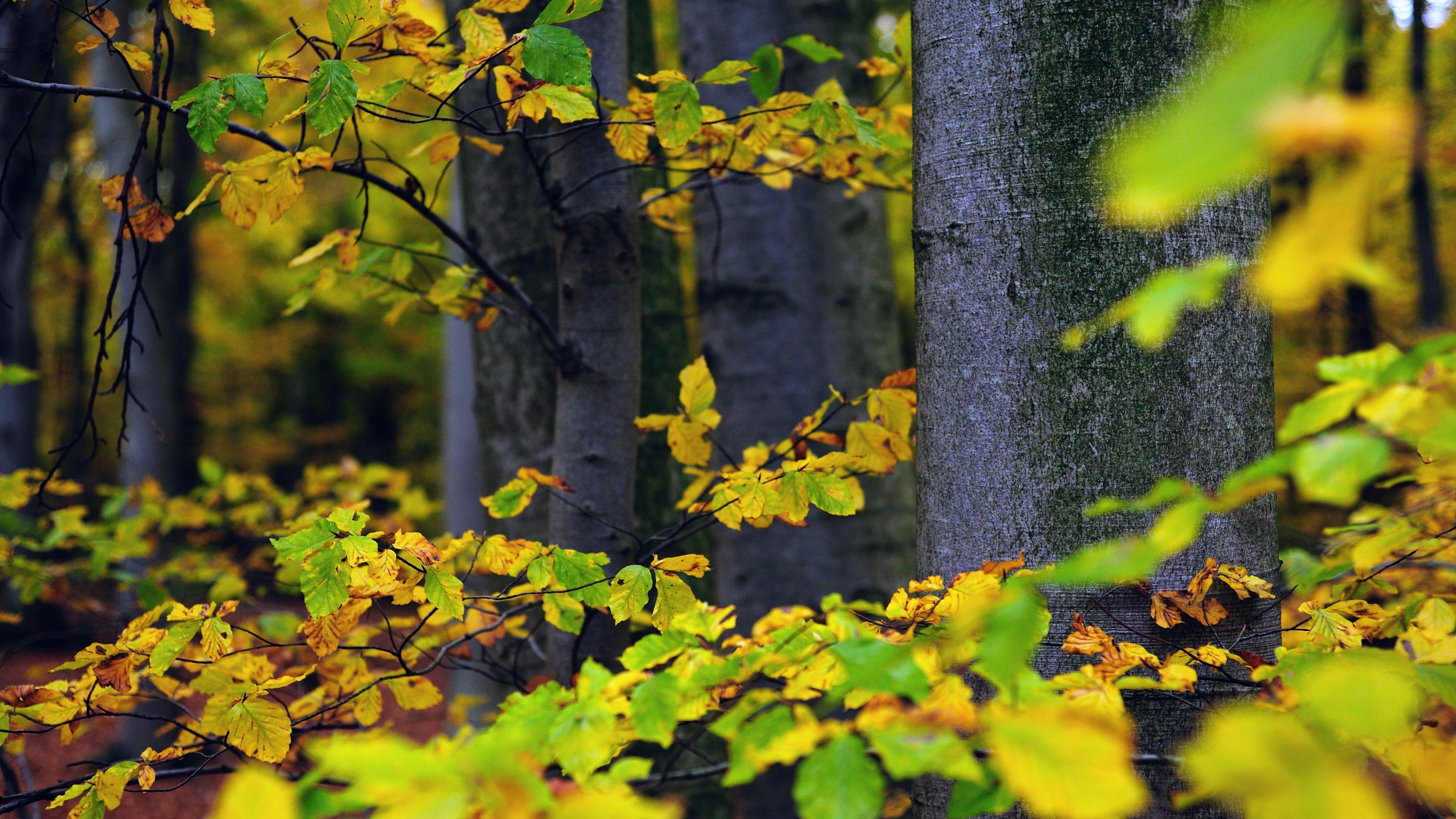 a27396f1f846ab Im September auf Rügen zeigt sich der Sommer noch einmal von seiner sanften  Seite: Goldenes Licht, zarter Nebel und anmutige Fäden von Spinnweben  läuten den ...